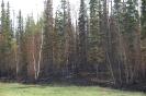 Northern BC & The Yukon